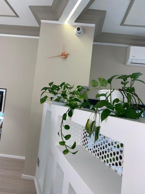 piante da ufficio